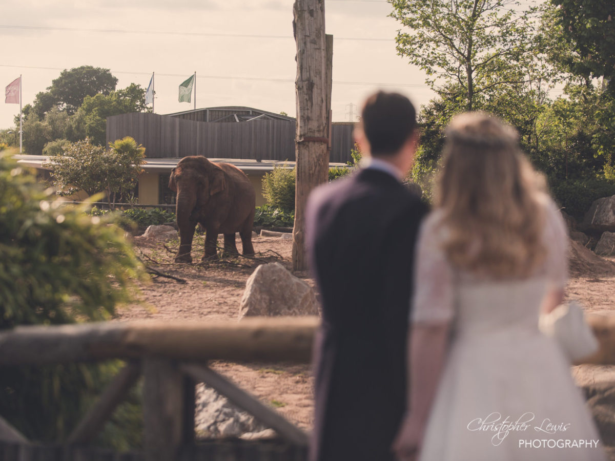Chester Zoo Wedding Photography 7