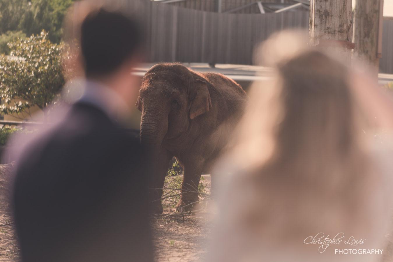 Chester Zoo Wedding 173